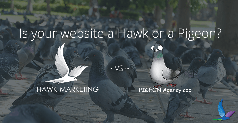 Website Comparison Hawk vs Pigeon